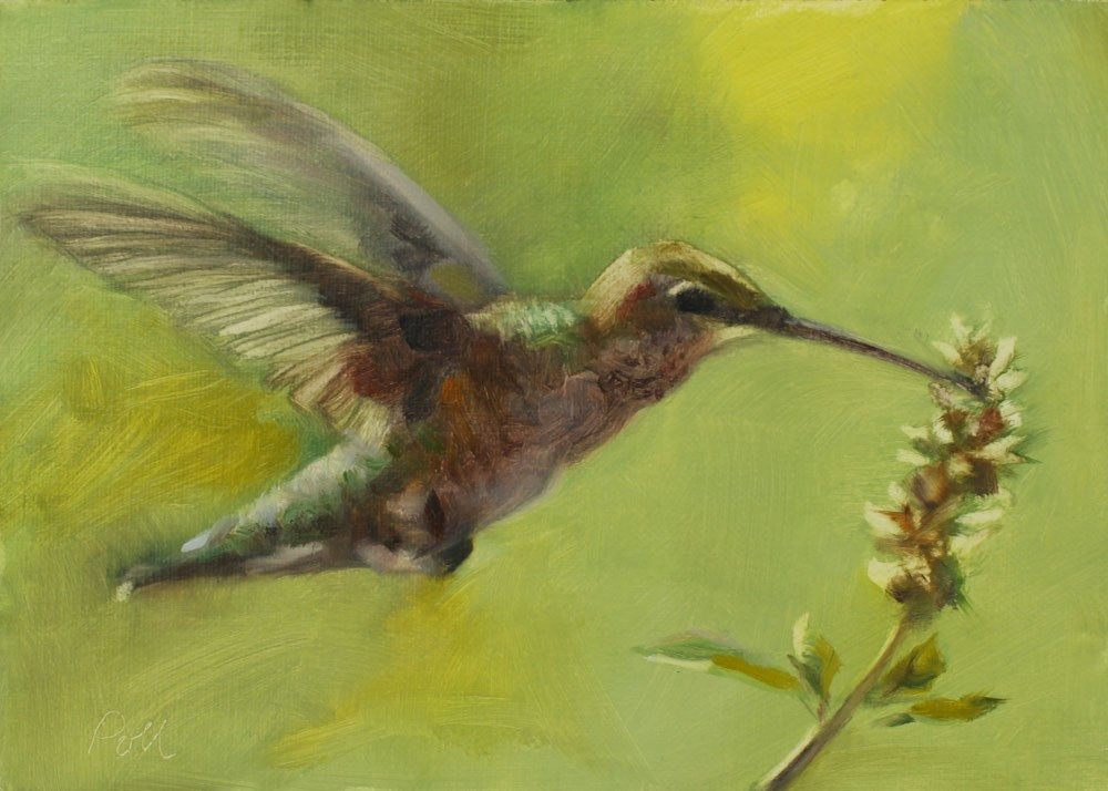"""Morning Hummingbird"" original fine art by Pamela Poll"