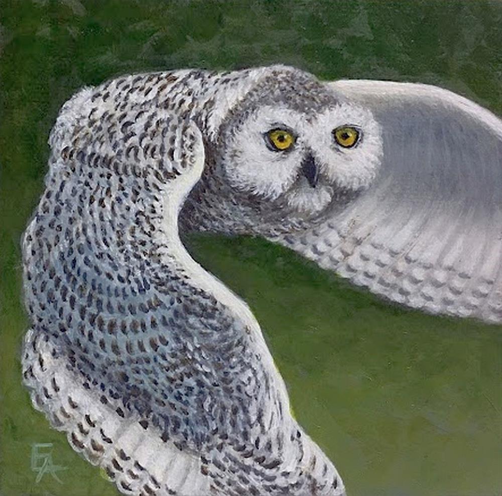 """""""Snowy Owl"""" original fine art by Elizabeth Elgin"""