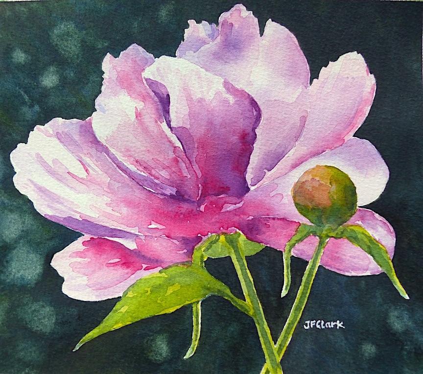 """Pink Peony with Bud"" original fine art by Judith Freeman Clark"