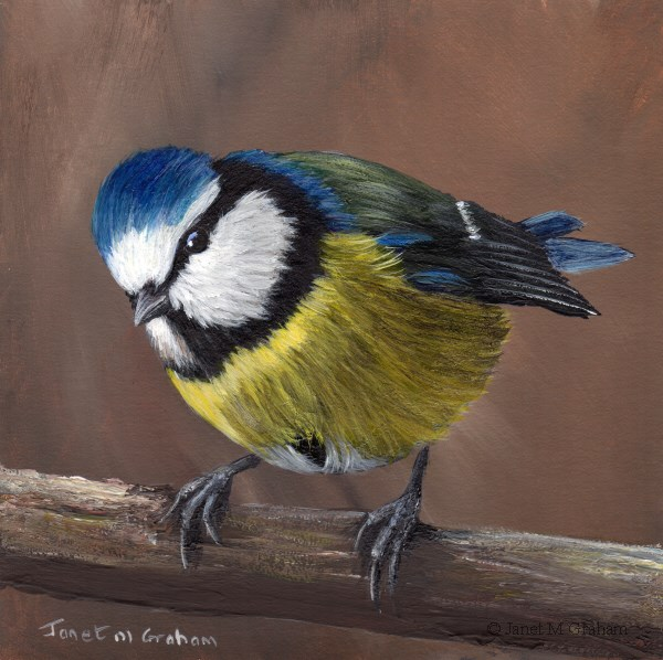 """Blue Tit No 7"" original fine art by Janet Graham"