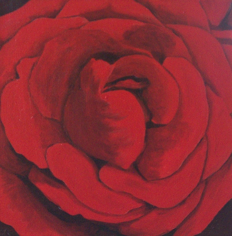 """Red Rose Study"" original fine art by Lisa Wiertel"