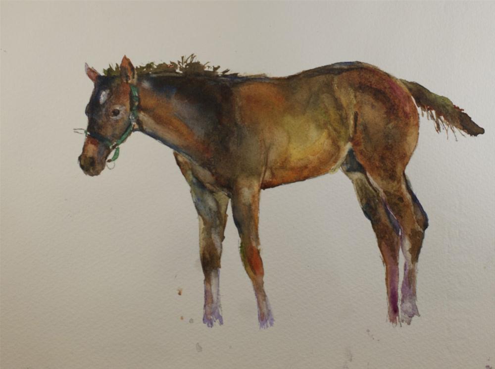 """Kentucky Foal #5"" original fine art by Sue Churchgrant"