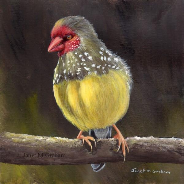"""Star Finch"" original fine art by Janet Graham"