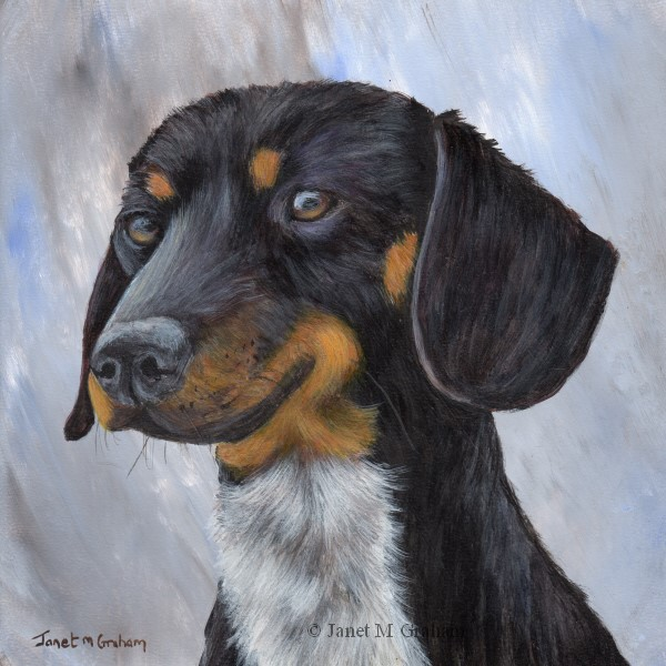 """Dachshund"" original fine art by Janet Graham"