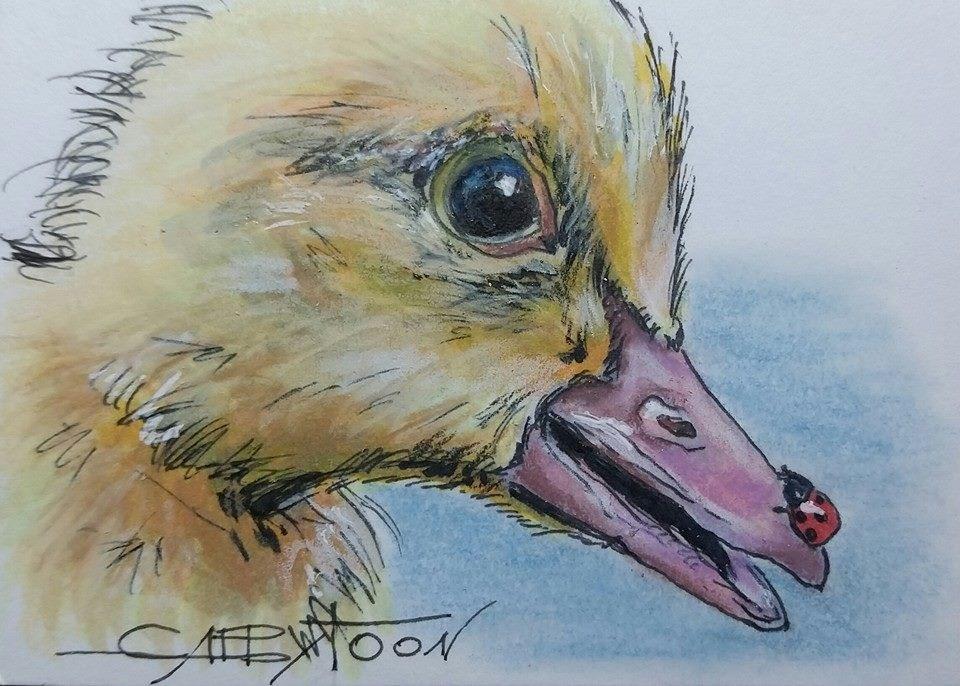 """""""Duck(ACEO)"""" original fine art by Gabriella DeLamater"""