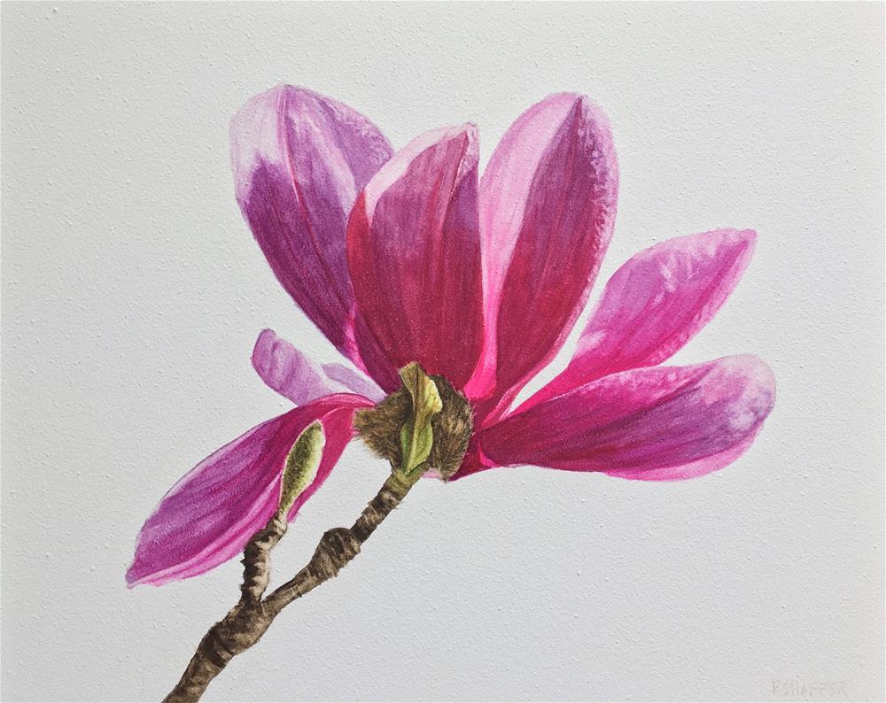 """Magnolia"" original fine art by Renay Shaffer"