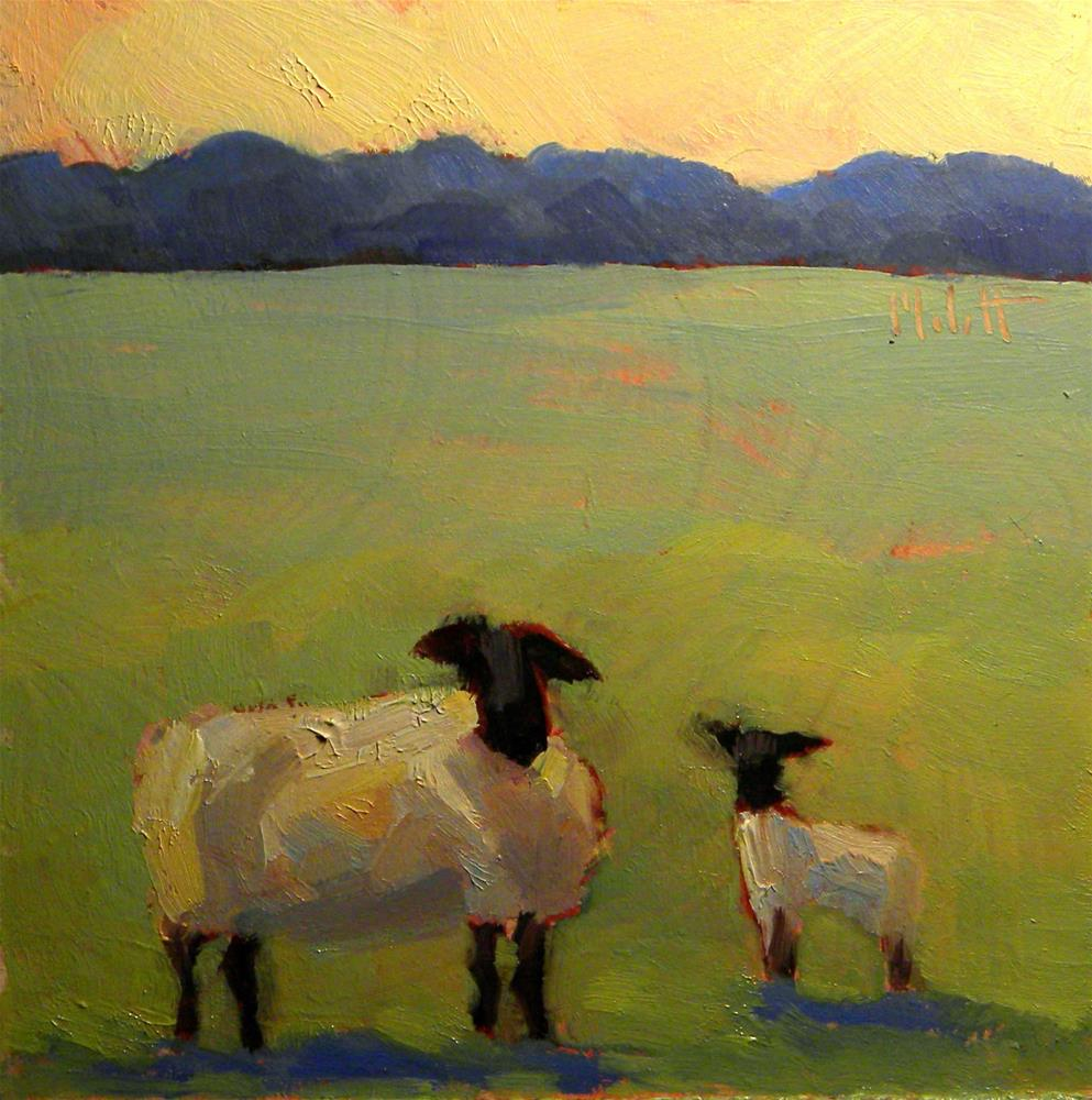 """Sheep Study Daily Painting Heidi Malott"" original fine art by Heidi Malott"