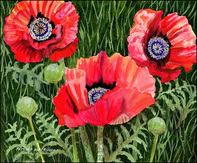 """Poppies!"" original fine art by Patricia Ann Rizzo"