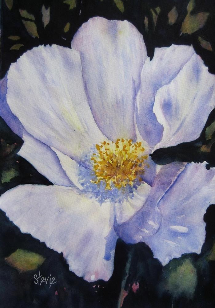 """Matilija Poppy"" original fine art by Stevie Denny"