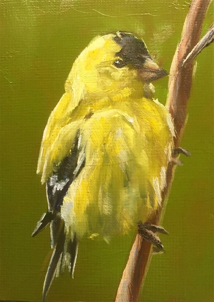 """Clinging Goldfinch"" original fine art by Gary Bruton"