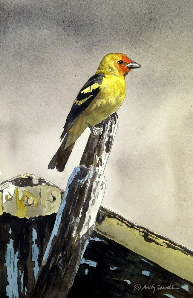 """""""Western Tanager"""" original fine art by Andy Sewell"""