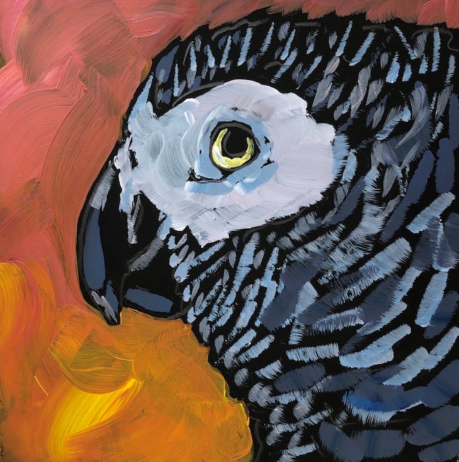 """Gideon the African Grey"" original fine art by Kat Corrigan"