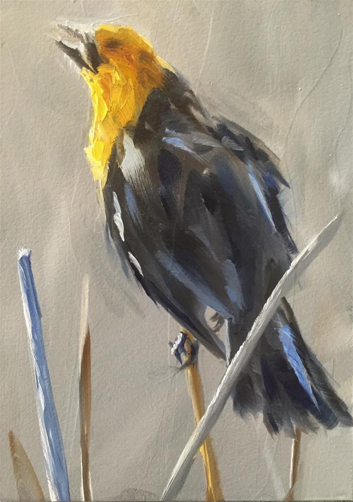 """Yellow headed Blackbird"" original fine art by Gary Bruton"