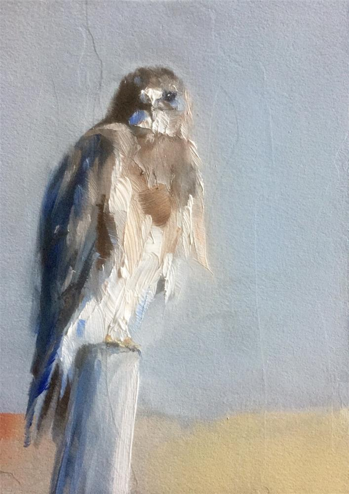 """Eyes Like a Hawk"" original fine art by Gary Bruton"