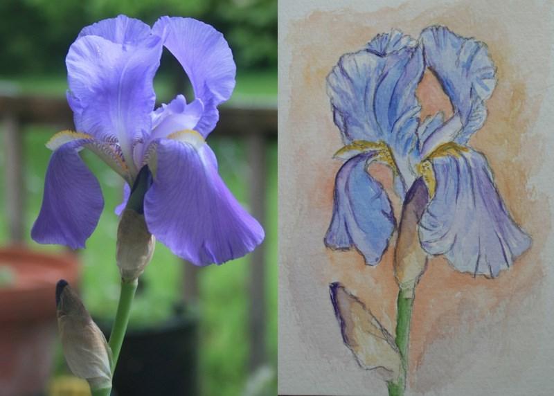 """Iris 1 and Iris 2"" original fine art by Jean Nelson"
