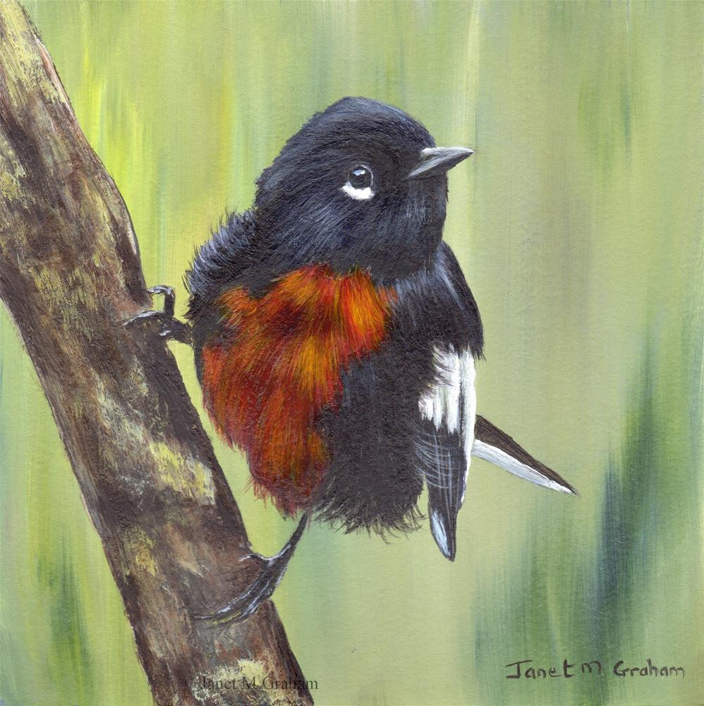 """Painted Redstart"" original fine art by Janet Graham"