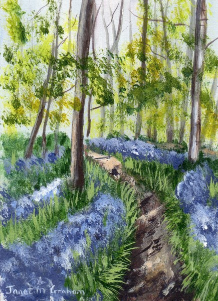 """""""Bluebell Forest ACEO"""" original fine art by Janet Graham"""