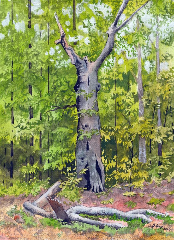 """Beech Snag 2"" original fine art by Jeff Atnip"