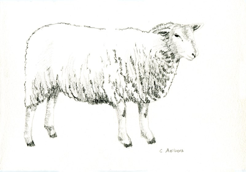 """""""Waiting for the Flock"""" original fine art by Corinne Aelbers"""