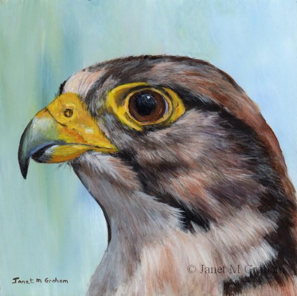 """Lanner Falcon"" original fine art by Janet Graham"