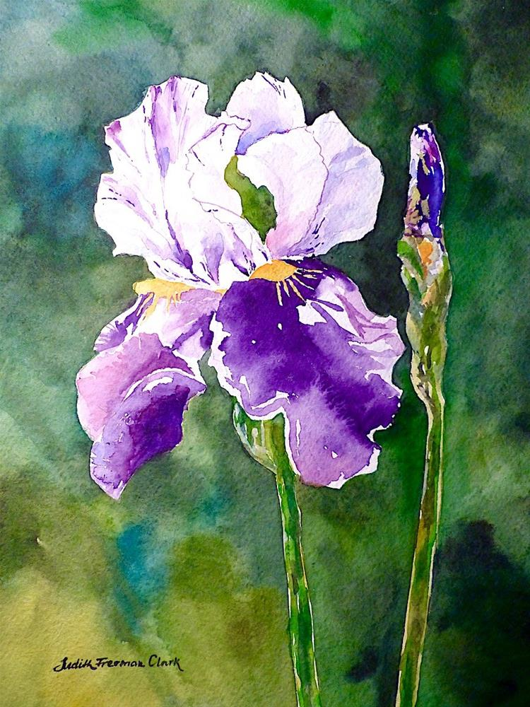 """Purple Iris, study"" original fine art by Judith Freeman Clark"