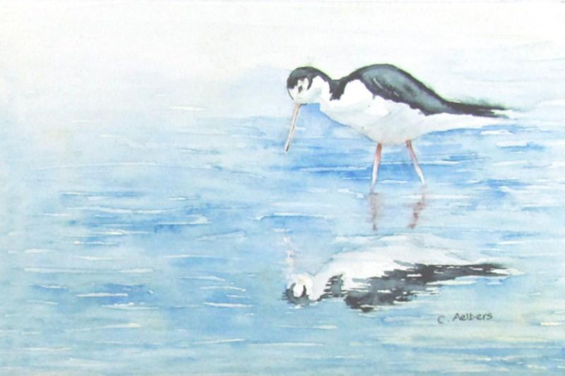 """""""Black Necked Stilt"""" original fine art by Corinne Aelbers"""