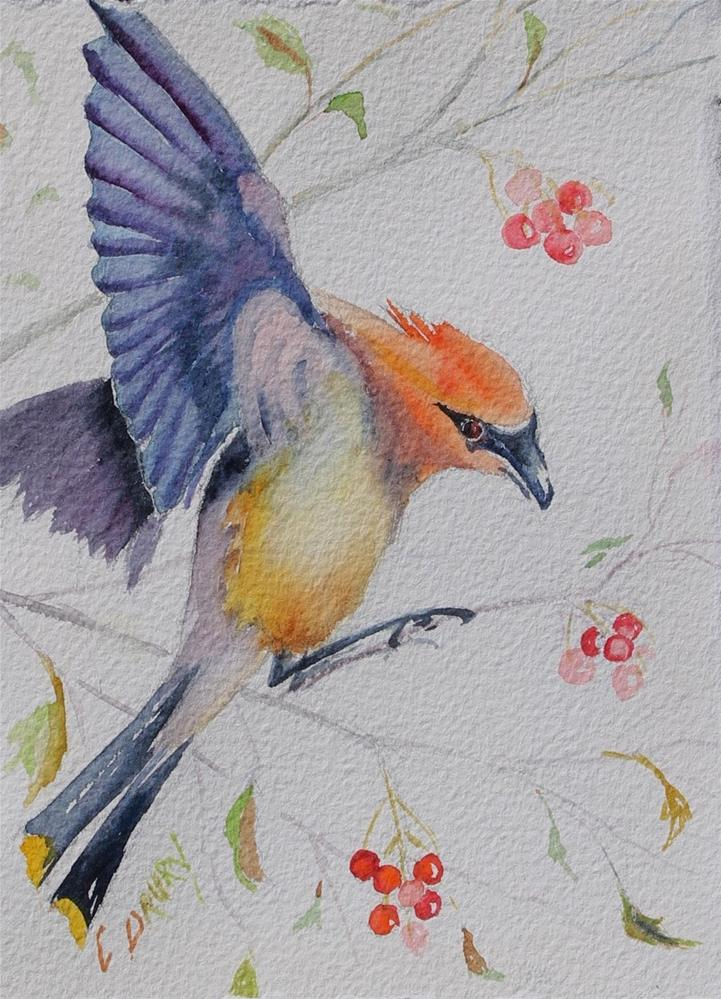 """Waxwing"" original fine art by Colleen Drury"
