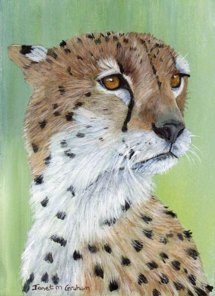 """Cheetah ACEO"" original fine art by Janet Graham"