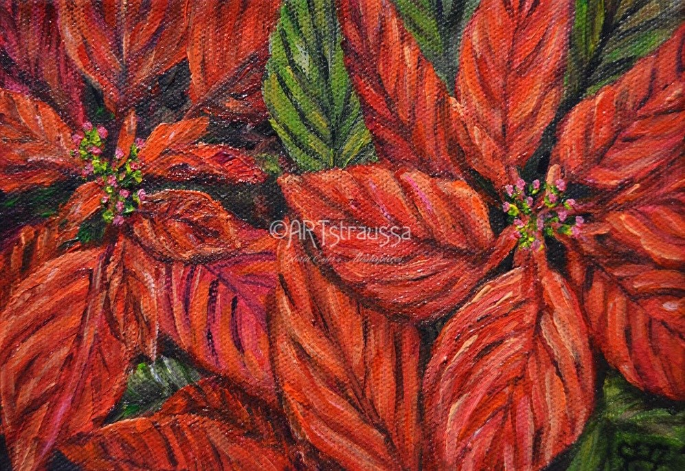 """SALE!!!Poinsetta Blooms"" original fine art by Gloria Ester"