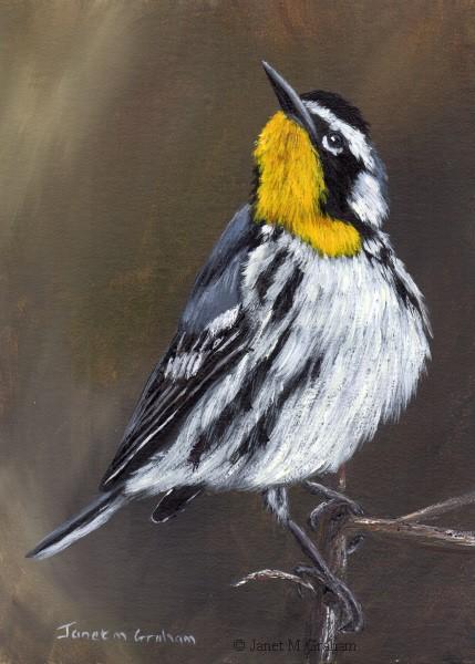 """Yellow Throated Warbler No 2"" original fine art by Janet Graham"
