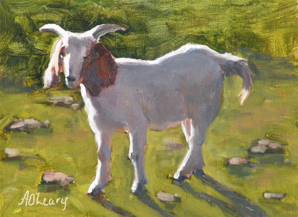 """""""Kreusler Goat"""" original fine art by Alice O'Leary"""