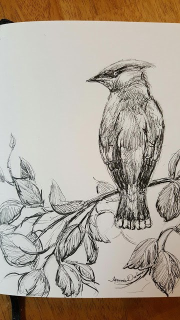 """Cedar Waxwing in Ink"" original fine art by Tammie Dickerson"