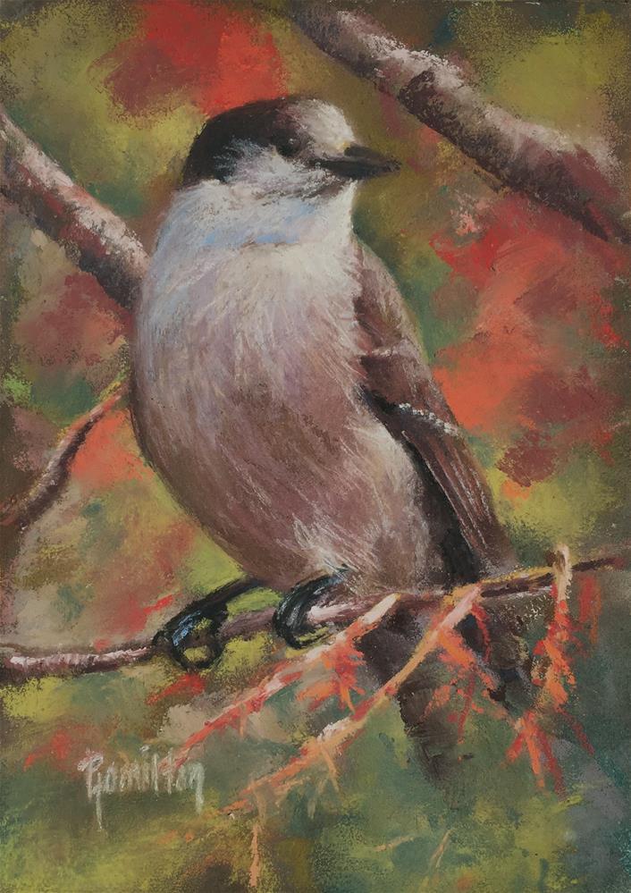 """Jay"" original fine art by Pamela Hamilton"