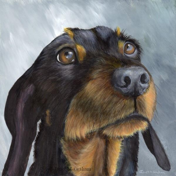"""""""Dachshund No 2"""" original fine art by Janet Graham"""