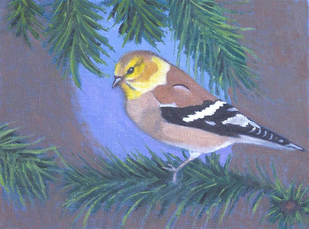"""Goldfinch in a Fir Tree"" original fine art by John Marcum"