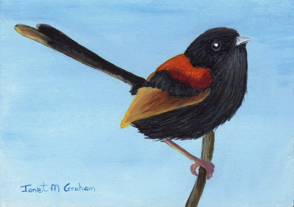 """""""Red Backed Fairy Wren ACEO"""" original fine art by Janet Graham"""