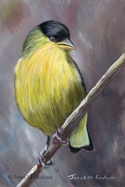"""Lesser Goldfinch No 3"" original fine art by Janet Graham"