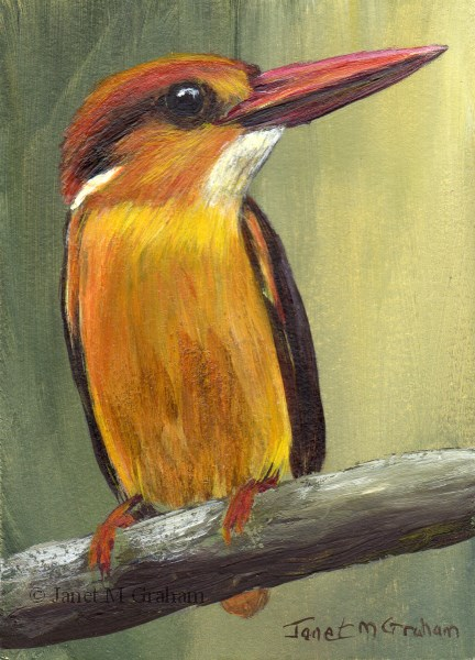 """Black Backed Kingfisher ACEO"" original fine art by Janet Graham"