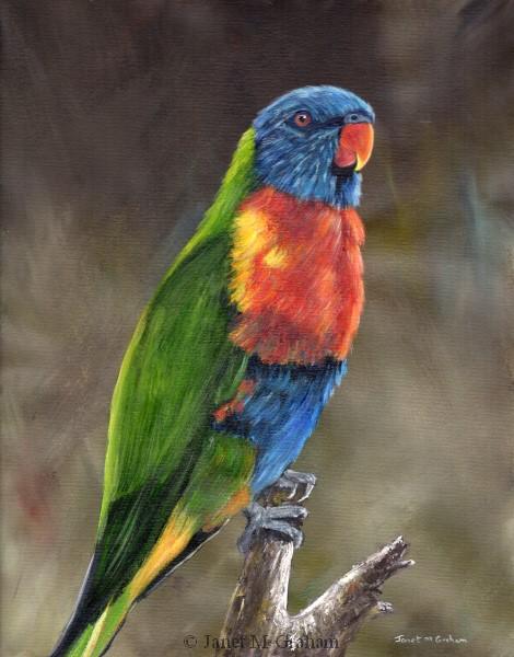"""Rainbow Lorikeet"" original fine art by Janet Graham"