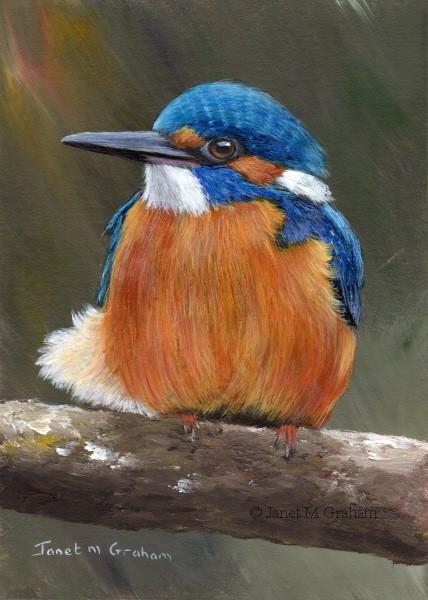 """Kingfisher No 4"" original fine art by Janet Graham"