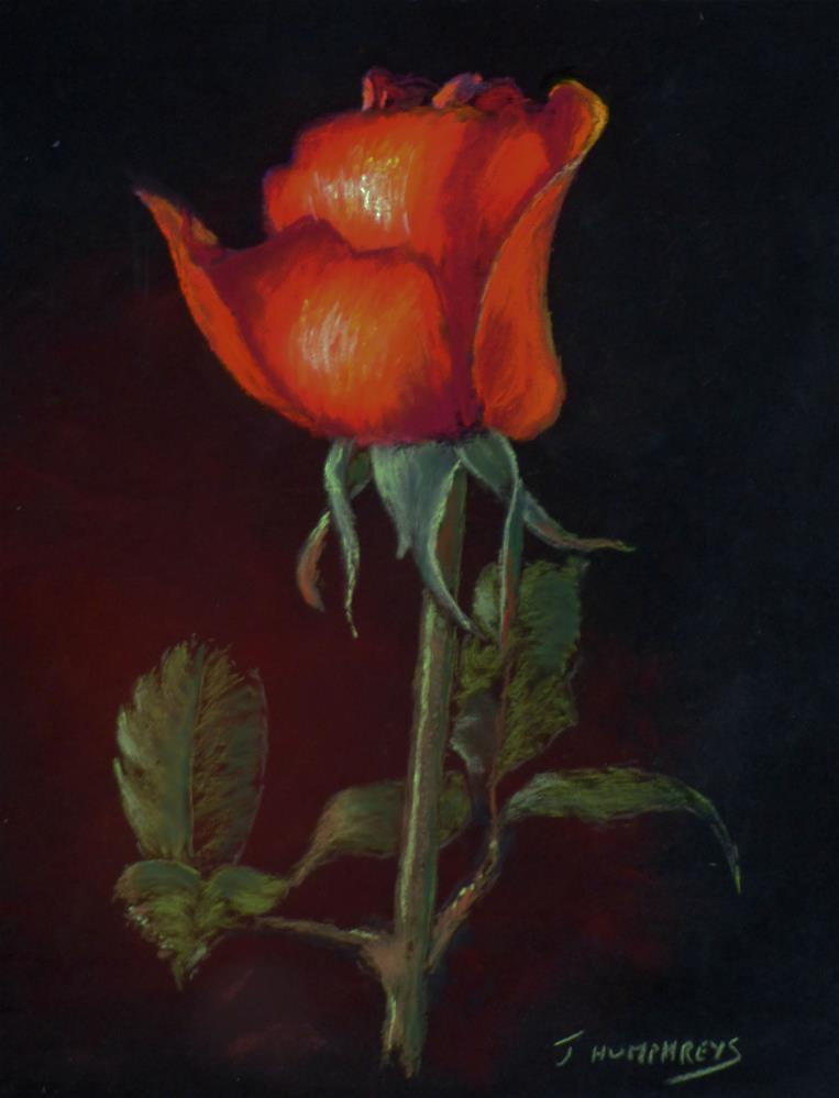 """Red Rose"" original fine art by James Humphreys"