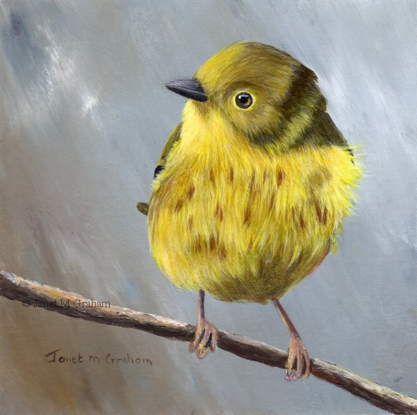 """Yellow Warbler No 4"" original fine art by Janet Graham"
