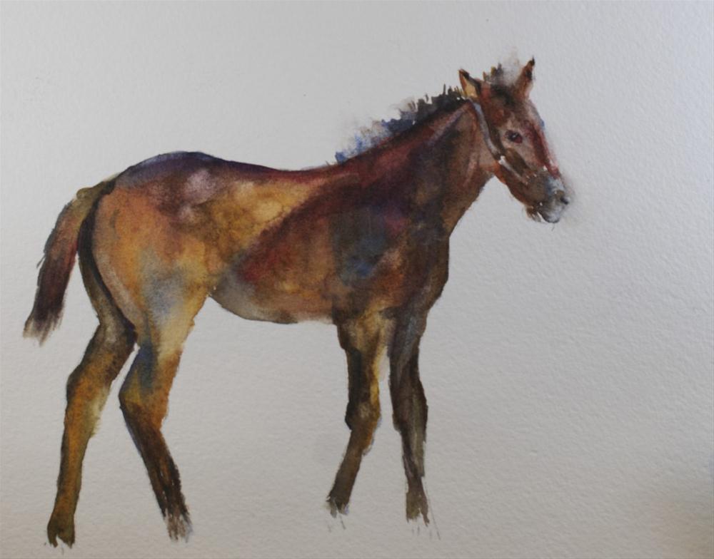 """Kentucky Foal #3"" original fine art by Sue Churchgrant"
