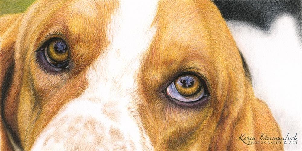 """Basset Eyes"" original fine art by Karen Broemmelsick"