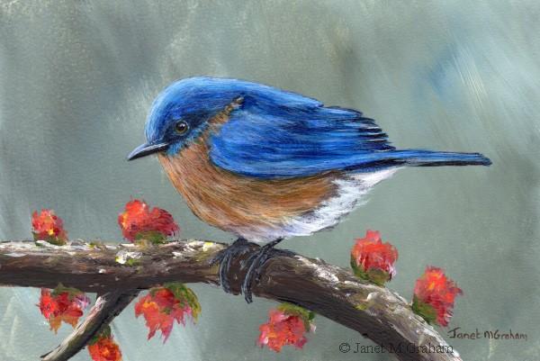 """Spring Bluebird"" original fine art by Janet Graham"