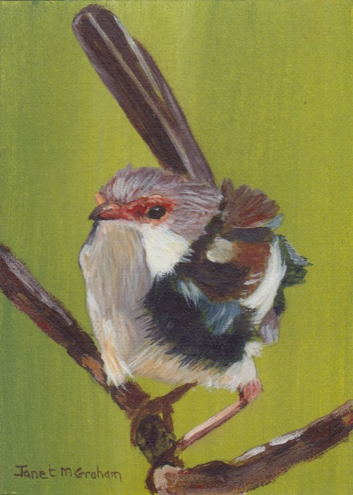 """""""Little Wren ACEO"""" original fine art by Janet Graham"""