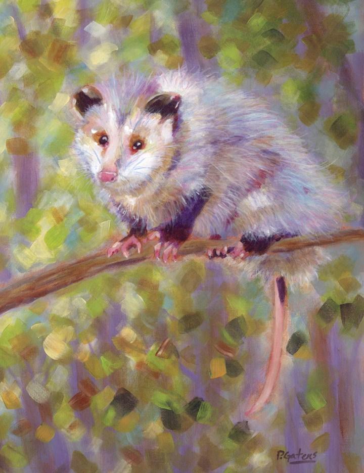 """Oh! Possum"" original fine art by Pamela Gatens"