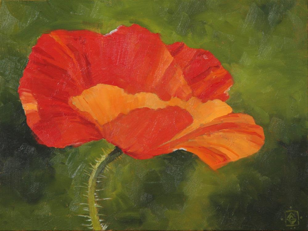 """Delicate Poppy"" original fine art by Carol Granger"
