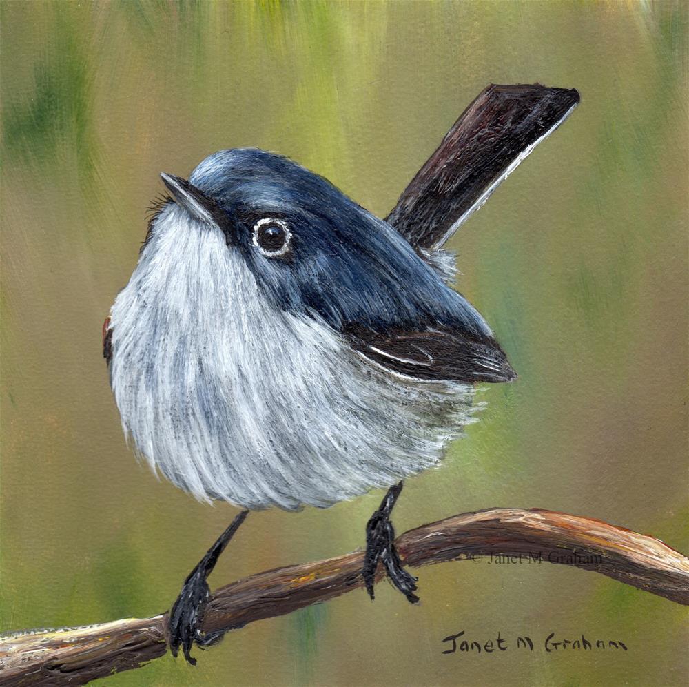 """Blue Gray Gnatcatcher No 2"" original fine art by Janet Graham"