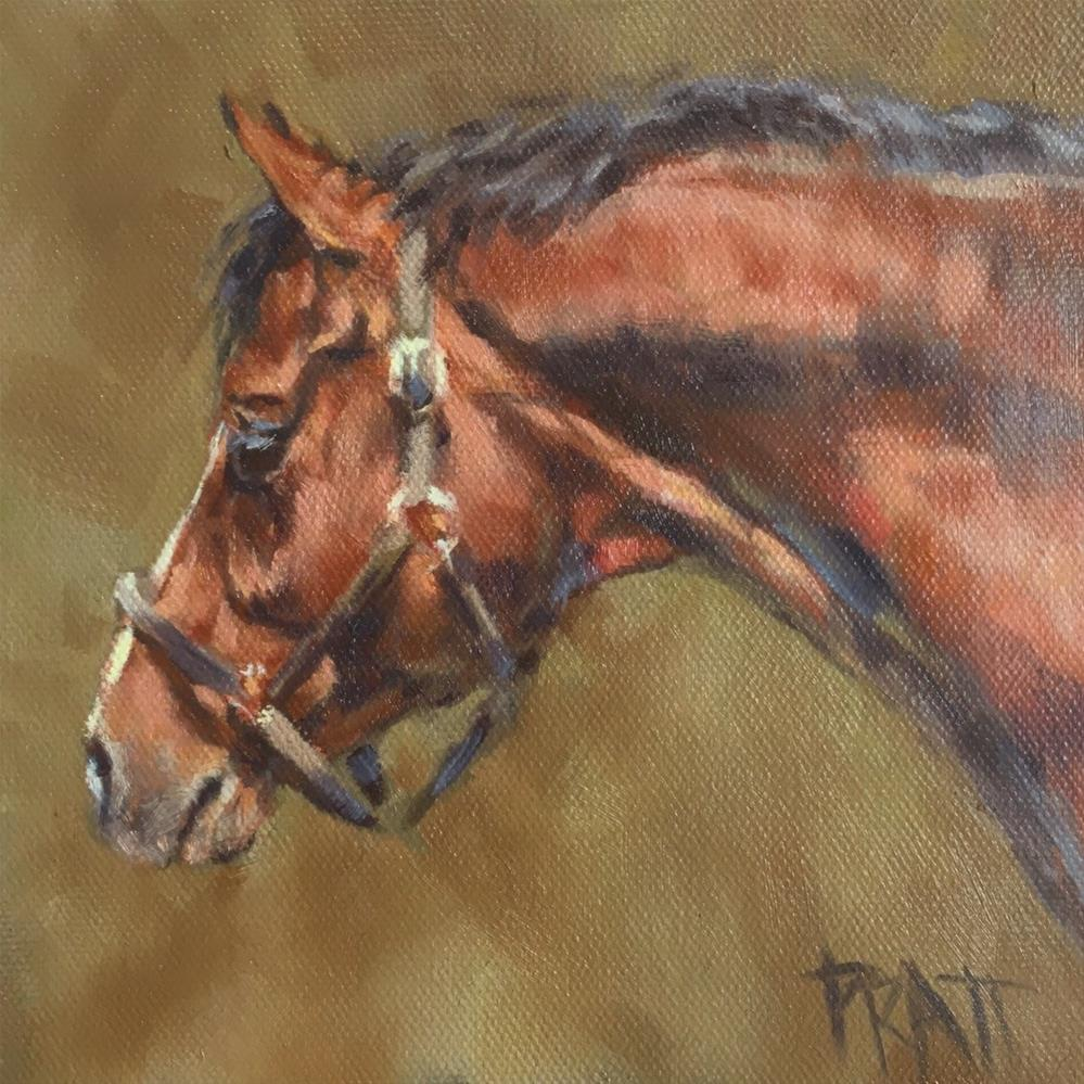 """Young Hunter Stallion"" original fine art by Jennifer Pratt"